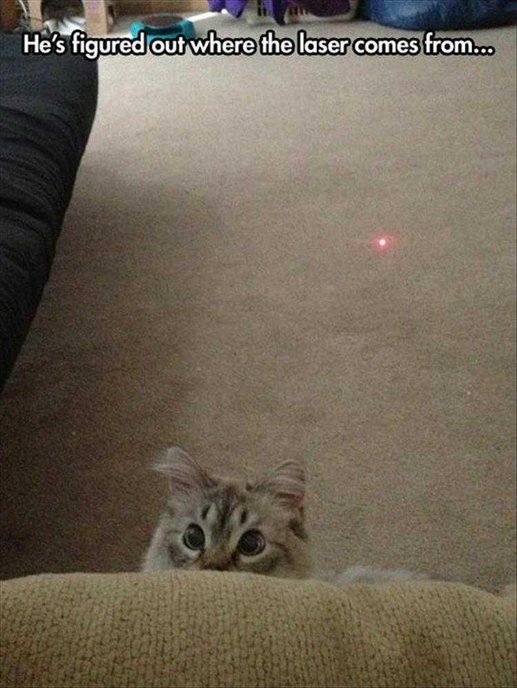 Hilarious Pet Pics - Sharp Kitty