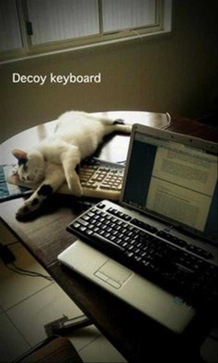 Hilarious Pet Pics - Worked Like A Dream