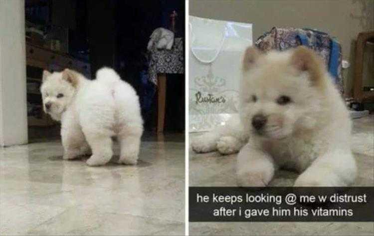 Hilarious Pet Pics - Sus
