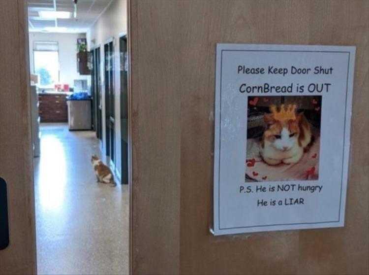 Cute Pet Memes - Be Warned