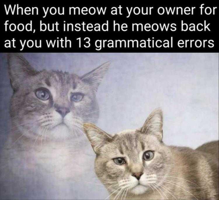 Cute Pet Memes - All I Said Was Food