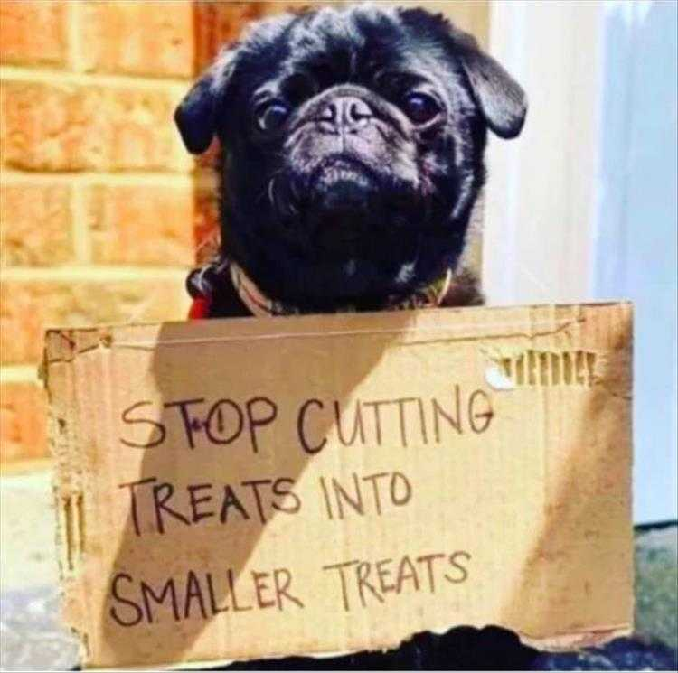 Cute Pet Memes - We Can Tell