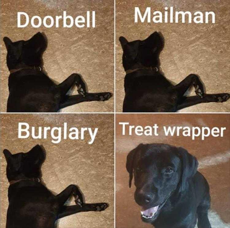 Cute Pet Memes - Guard Dog Not My Job...