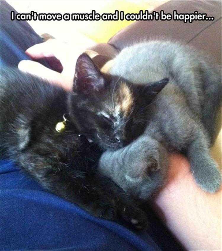 Cute Pet Memes - Cuteness Defined