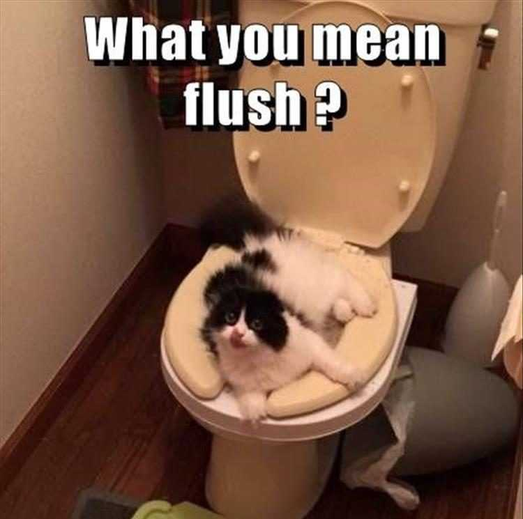 funny cat photos - flush after use