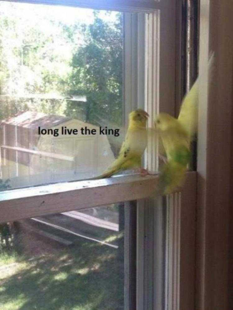 Funny Animal Pics With Caption - Budgies Paying Respect