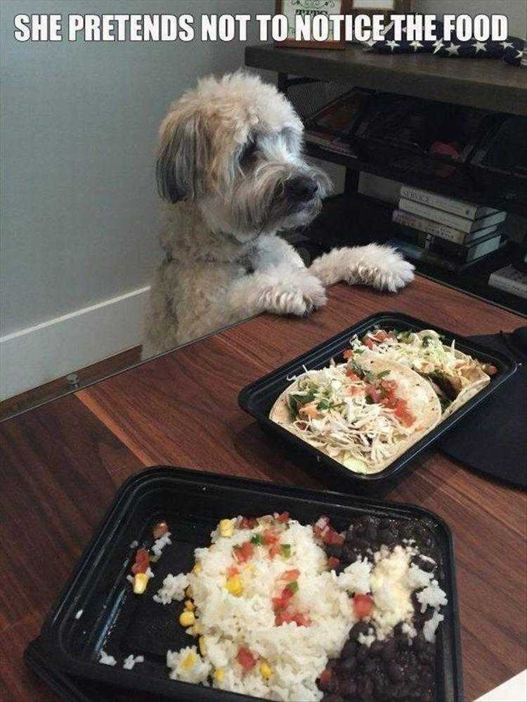 Funny Dog Pic With Caption - Not Looking At The Food