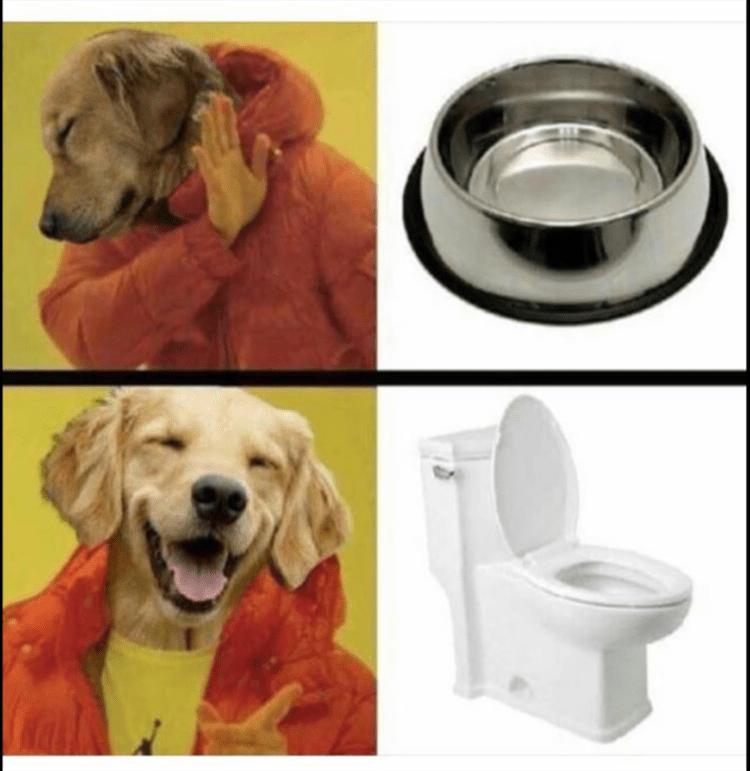 Funny Dog Pics Memes - Favorite Dog Water Bowl