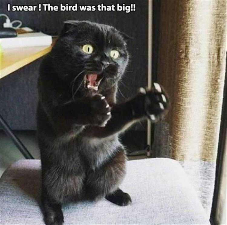 Funny Cat Pics With Captions - Cat Describing Bird