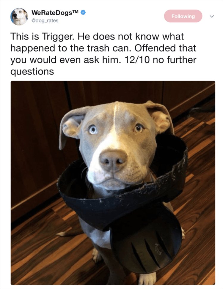 Funny Dog Pics With Caption - Dog Looking Innocent