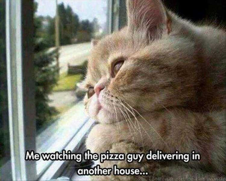 Funny Cat Pics With Captions - Cat Looking Envious