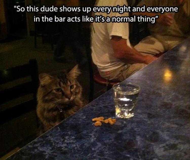 Cat Pics With Captions - Cat Sitting At Bar