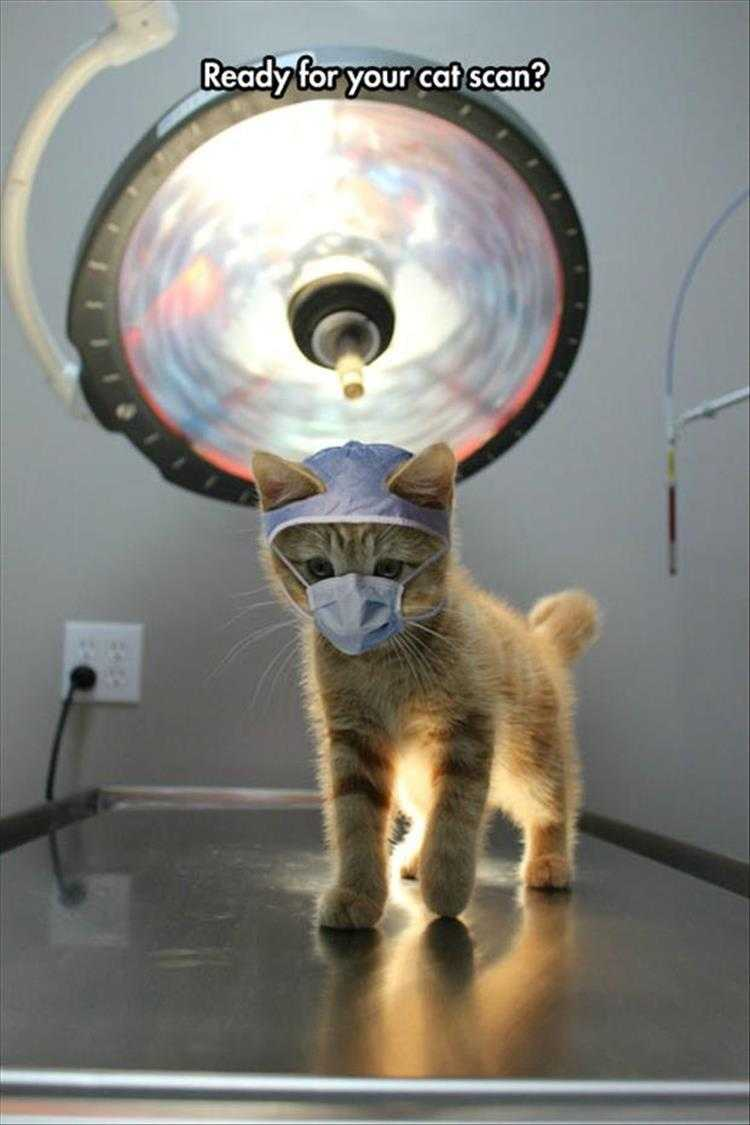 Funny Cat Pics With Jokes - Cat Scan