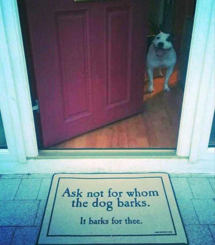Funny Dog Pics With Quotes - Dog Philosophy