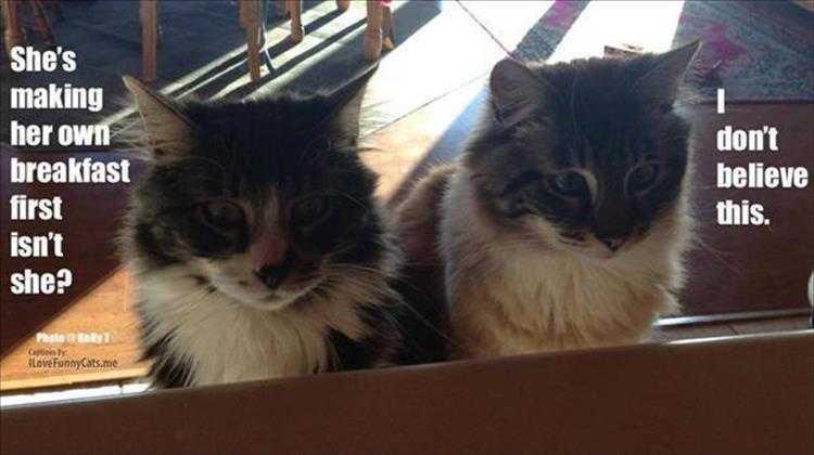 Funny Cat Pics With Captions - Cat Disbelief