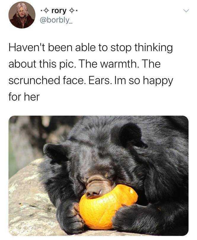 wholesome memes - bear eating orange