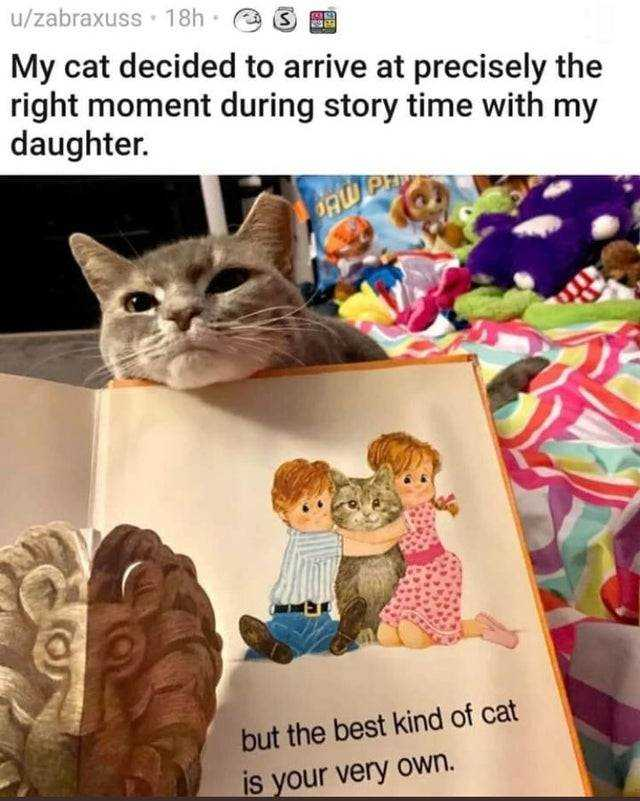 wholesome memes - well timed cat entrance