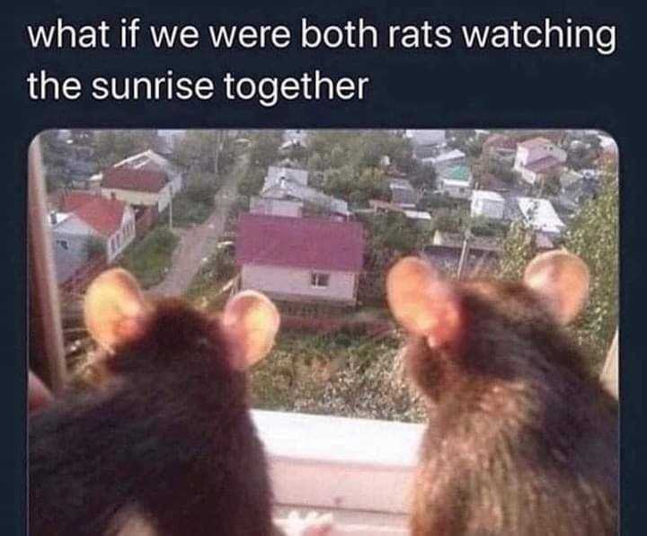 wholesome memes - rats watching