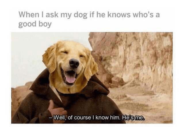wholesome memes - good boy