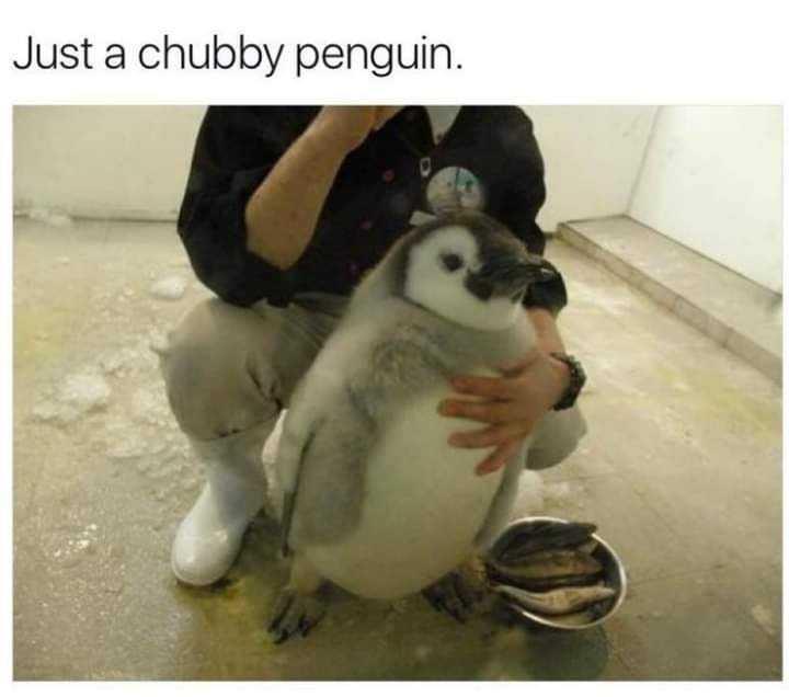 wholesome meme - penguin needs diet