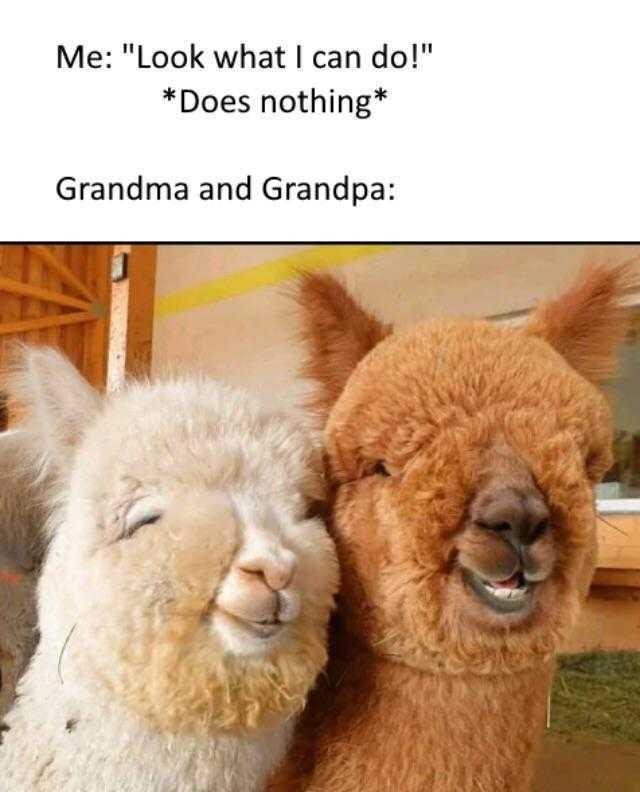 wholesome memes - grandparents