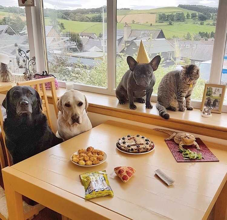 wholesome memes - birthday party
