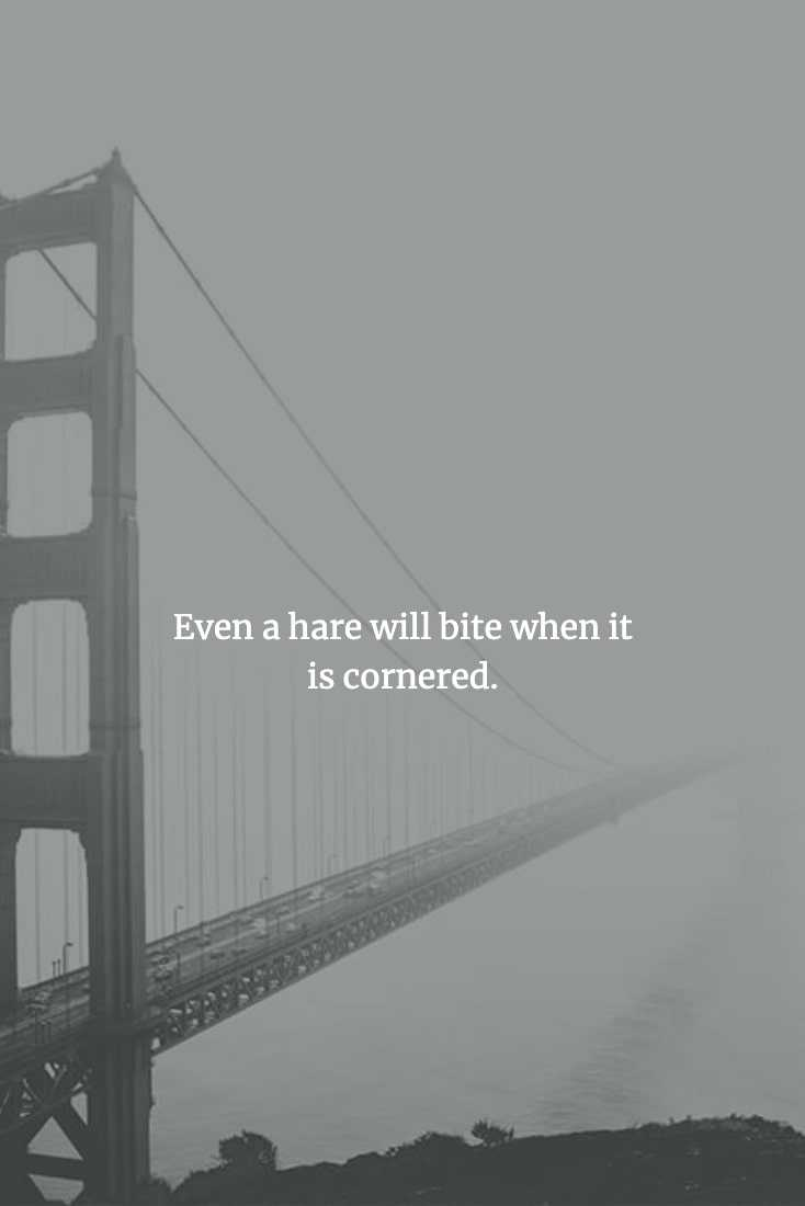 Wise Chinese Proverb - When Left With No Choice Even Something Harmless Will Attack
