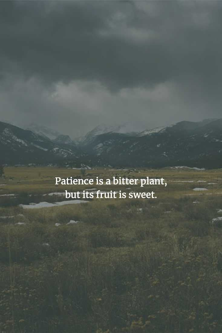 Chinese Proverbs - Patience May Be Hard To Exercise, But The Results Will Be Worth It