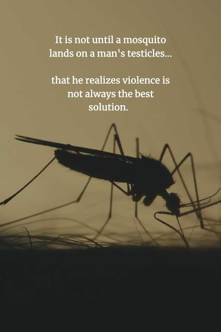 Funny Chinese Proverb - Violence Is Not The Answer