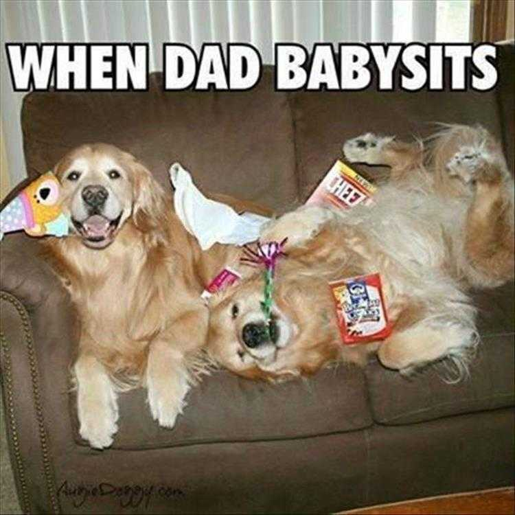 Funny Pictures Of Animals - Gone To The Dogs