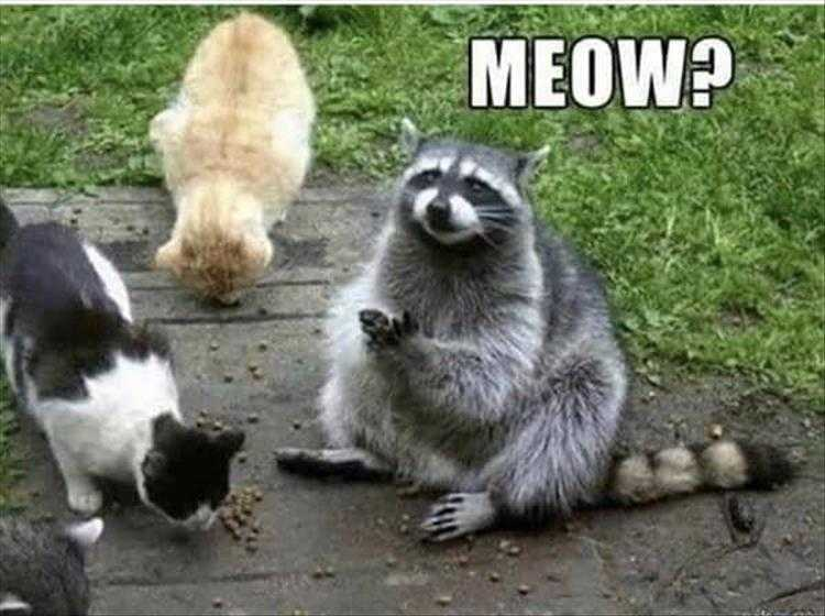 Funny Animal Photos With Captions - Could Almost Pass For A Cat