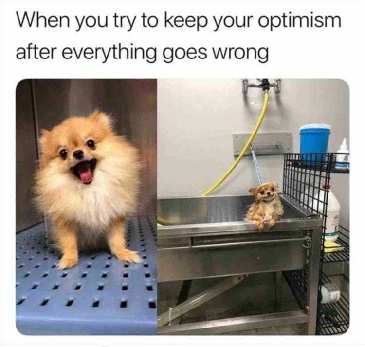 Funny Animal Photos With Captions - Day Ended Differently Than How It Started