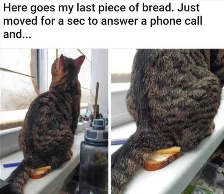 Funny Animal Photos With Captions - No Bread For You