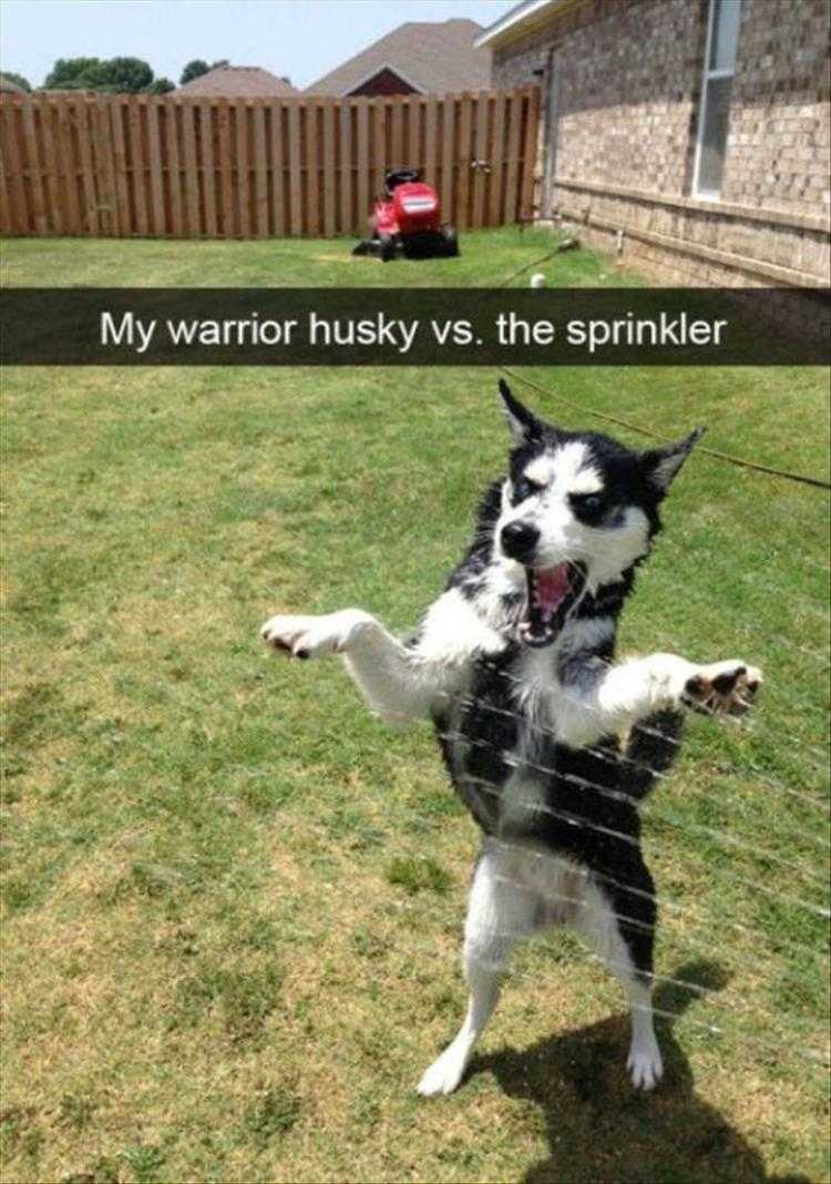 Funny Animal Photos With Captions - I Will End This Sorcery