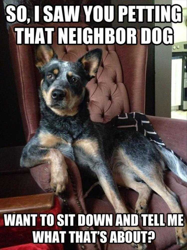 Funny Pictures With Animals - Coveting Thy Neighbors Dog