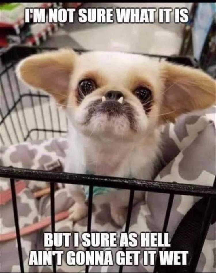 Animals Being Funny Pictures - Gremlin?
