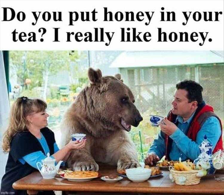 Hysterical Animal Pictures With Captions - Unbearably Cool Breakfast Conversations