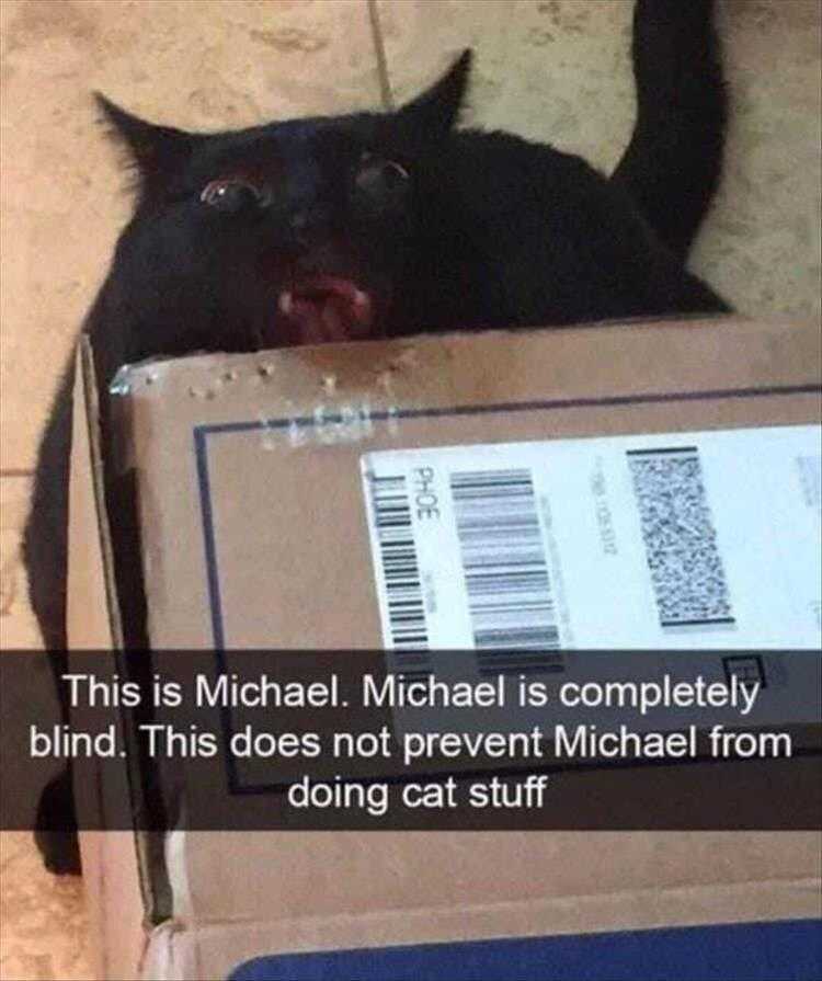 Hysterical Animal Pictures With Captions - Sensing Cardboard