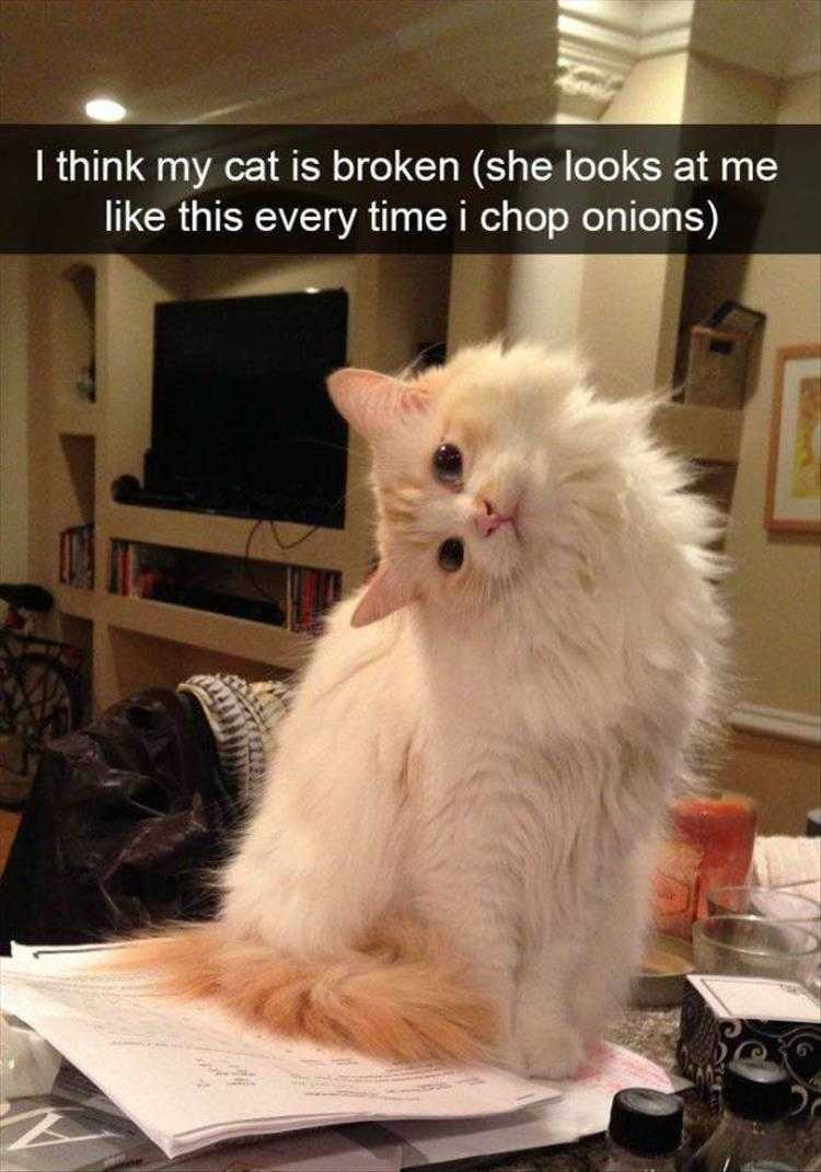 Hysterical Animal Picture With Captions - Why U Chop That Stinky Thing
