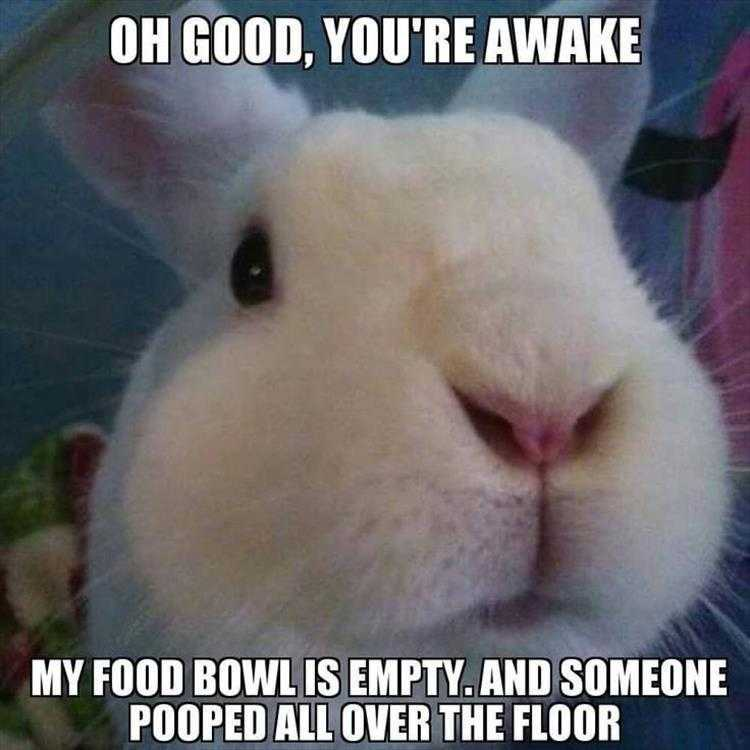 Hysterical Animal Pictures With Captions - Emergency