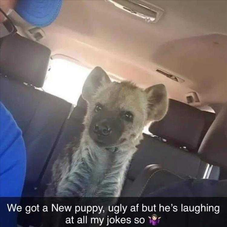 Hysterical Animal Pictures With Captions - Hyena Pup