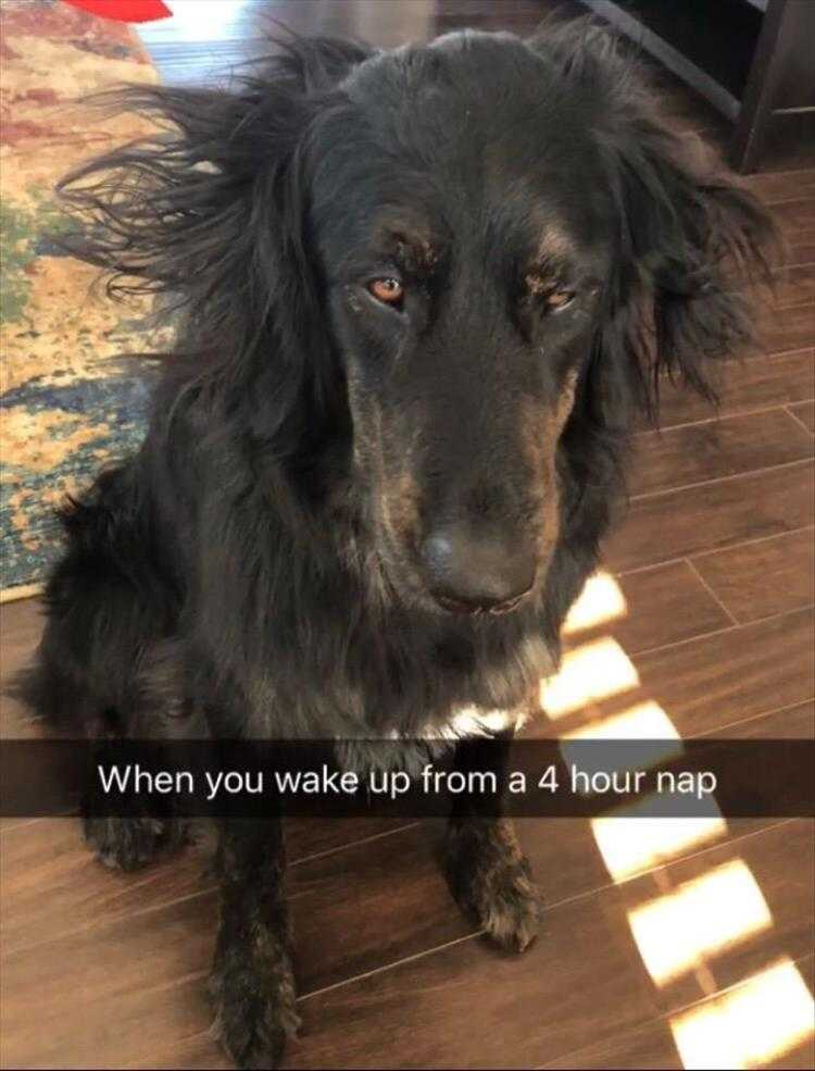 Hysterical Animal Pictures With Captions - Overlapped