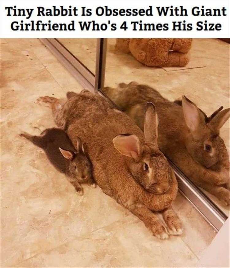 Hysterical Animal Pictures With Captions - Big Girls