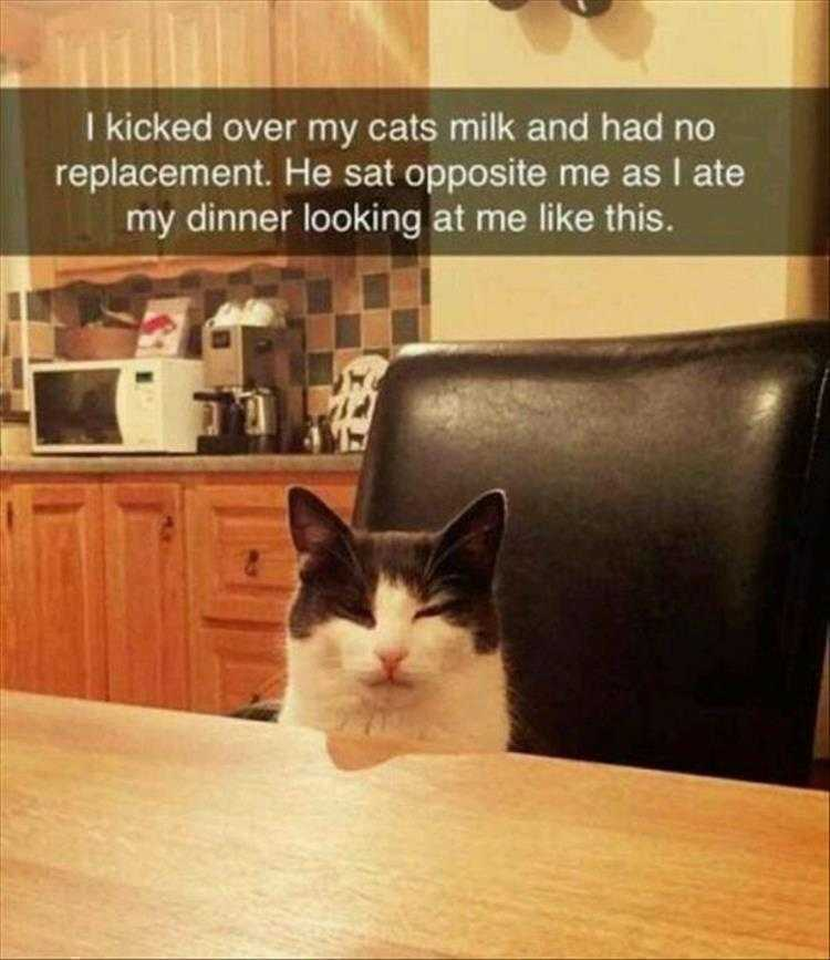 Hysterical Animal Pictures With Captions - Cat's Death Stare