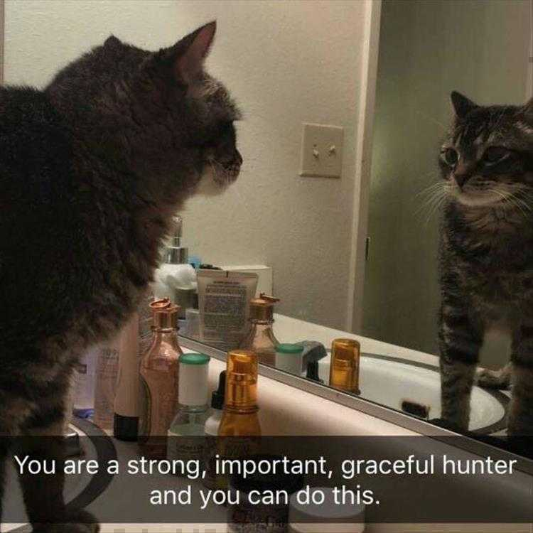 Hysterical Animal Pictures With Captions - Motivational Quotes