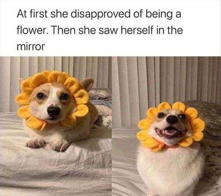 Animals Being Funny Photos - Flower Power