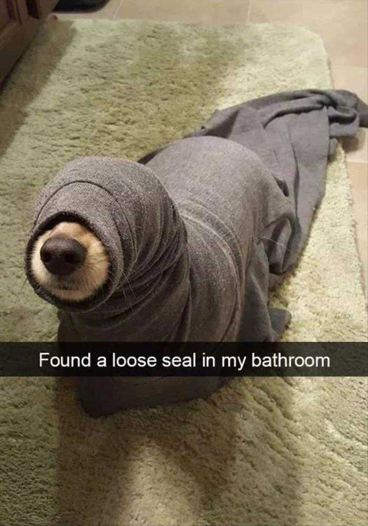Hysterical Animal Pictures With Captions - Land Seal