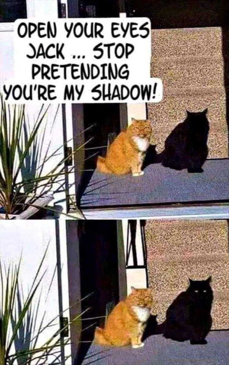 Hysterical Animal Pictures With Captions - The Art Of Stealth