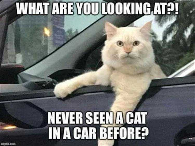 Hysterical Animal Pictures With Captions - Catty Driver