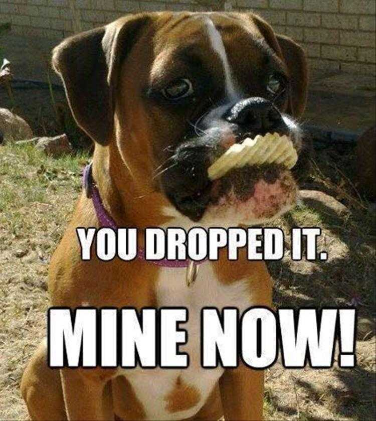 Hysterical Animal Pictures With Captions - Scavenger Hunt